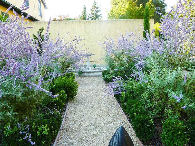 005-gallery-1-path-in-the-russian-sage-meander