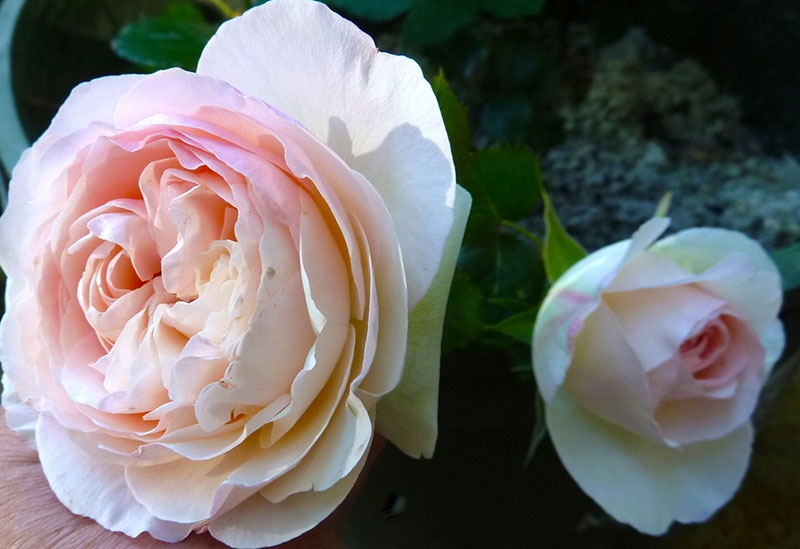 024-gallery-1-end-note-eden-rose-meander
