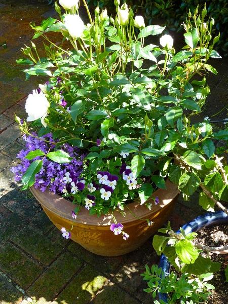 012-gallery-2-spring-pot-bouquet-meander