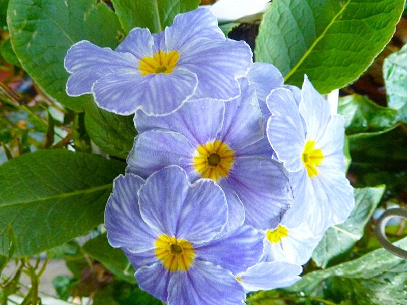 017-gallery-2-purple-flowers-meander